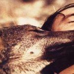 Castilla y León apura el plazo para matar lobos y vende (por si cuela) su cabeza a 7.000€