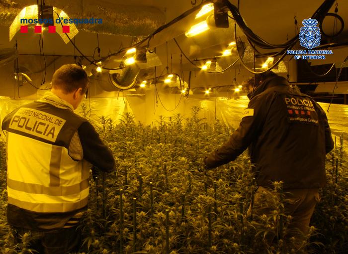 Cae un grupo criminal dedicado a traficar con marihuana y hachís en Reus