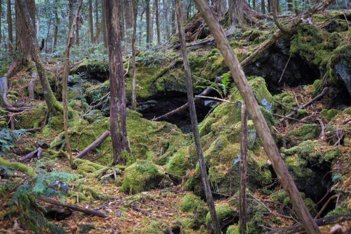 bosque de los muertos Japón