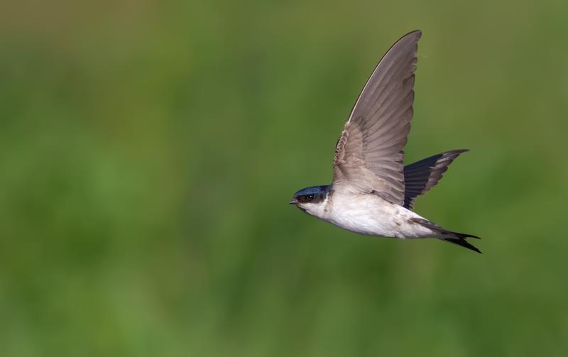 ¿Sabías que hoy se celebra el Día Mundial de las Aves Migratorias?
