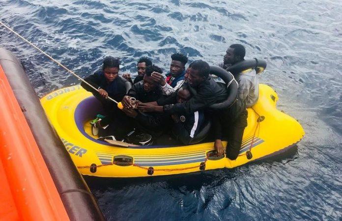 panteras migrantres