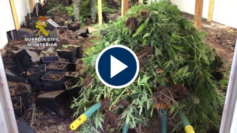 Cultivaban y vendían marihuana en La Rioja y País Vasco