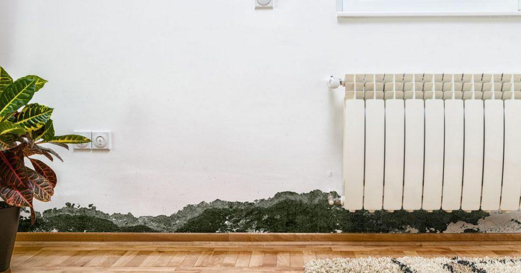 Los trucos para eliminar el moho de tu casa