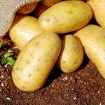 La dieta de la patata: el milagro para adelgazar 5 kilos en dos semanas