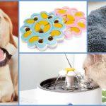 Los 8 accesorios de Aliexpress que tu mascota amará y aún no conoces