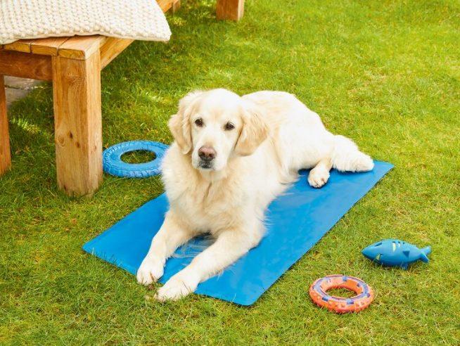 alfombra mascotas lidl