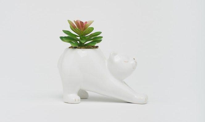 planta gato