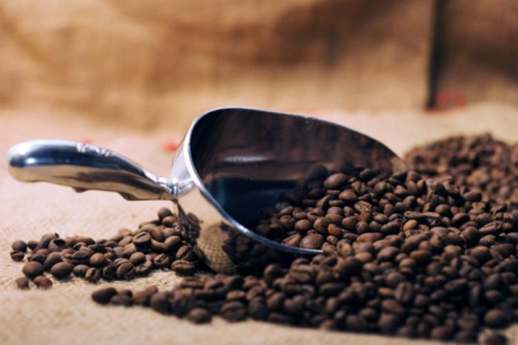 Escoge los mejores granos cafe