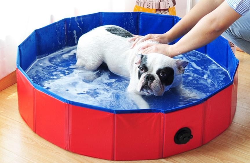 piscina mascotas