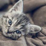 Si tienes un gato nunca sufrirás estas enfermedades